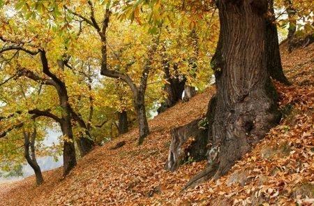 Alpiner-Hochgenuss-im-Herbst
