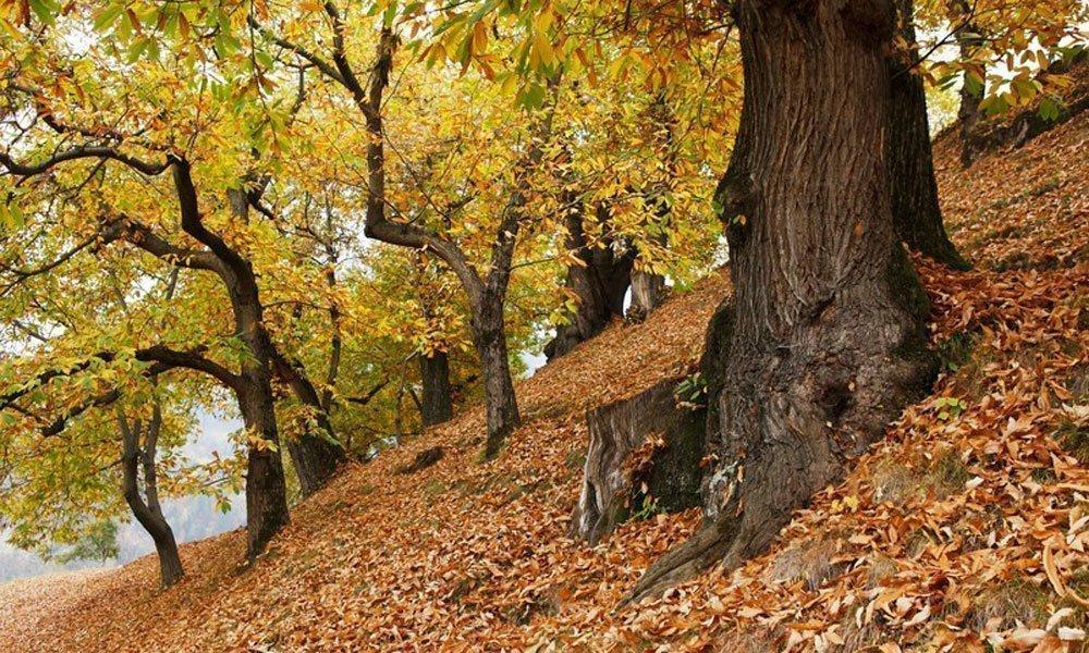 Piaceri alpini d'autunno