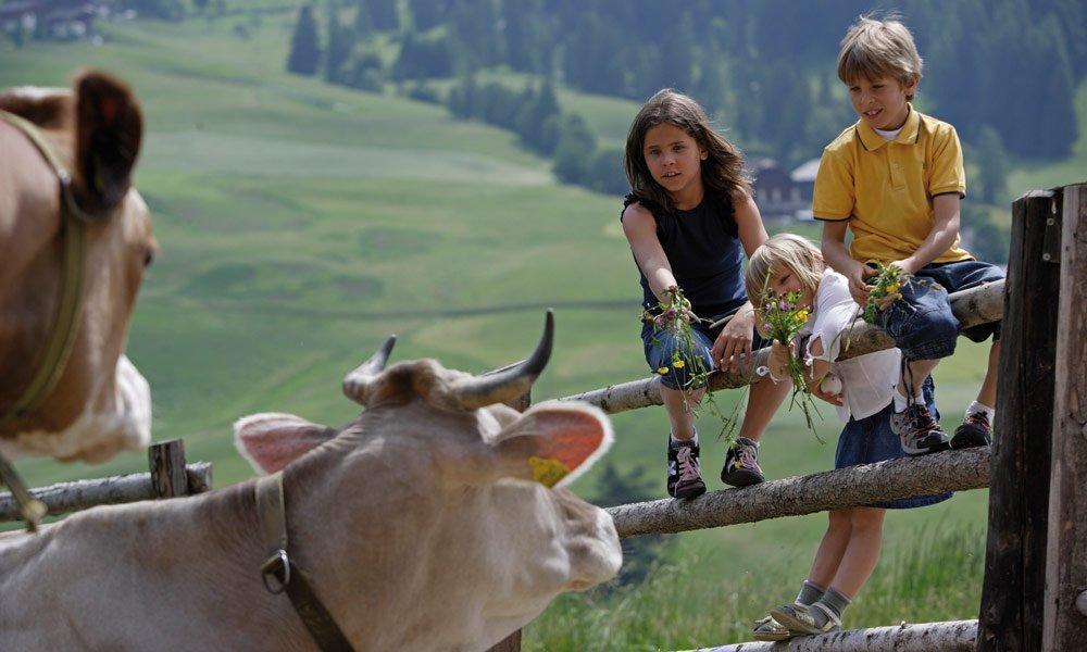 Ferien auf dem Bauernhof – Urlaub für die ganze Familie